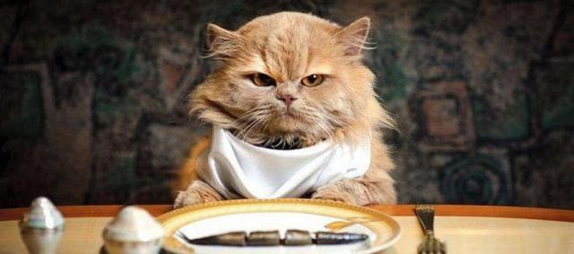 gatto ha fame