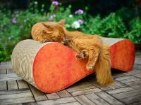 Foto Perchè sverminare il Gatto di casa?