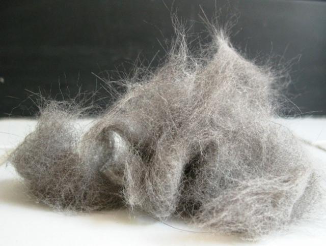 pelo di gatto