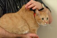 turgore pelle gatto