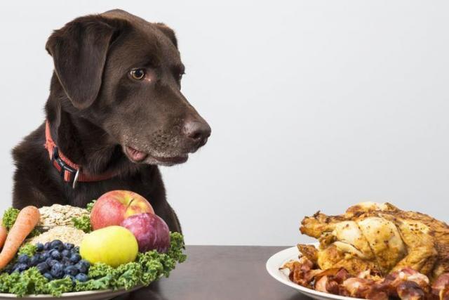 alimentazione e cane