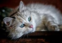 Foto Il mio Gatto è iperattivo?