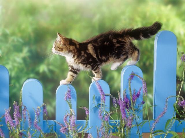 Foto Gatti che vivono fuori: i nostri consigli