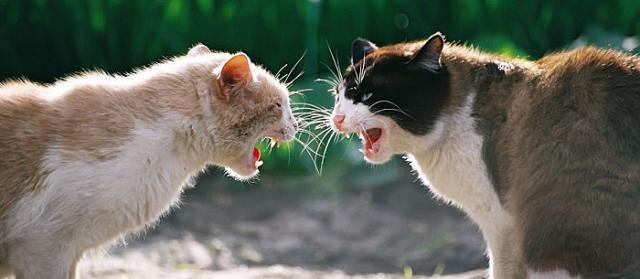 gatti aggressivi