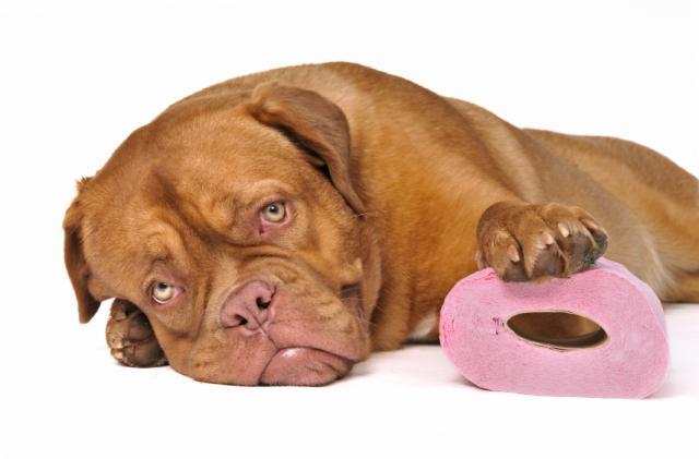 cane problemi digestivi