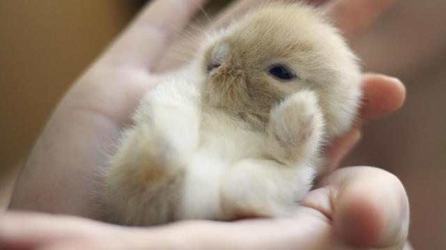 coniglietto in mano