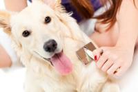 Foto 10 razze di Cani che non perdono pelo