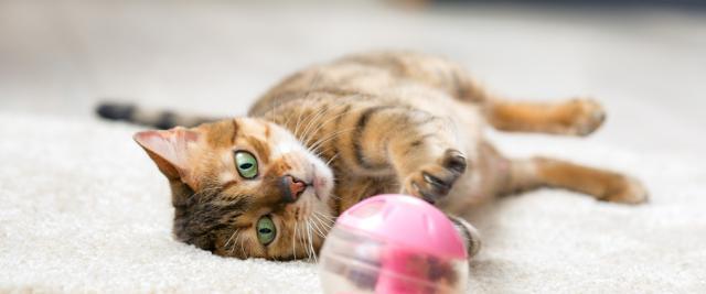 gatto esercizio fisico