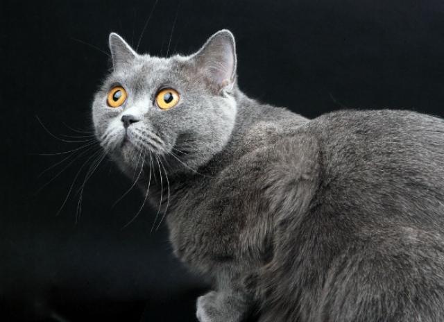 malattie fegato gatto