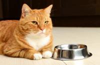 Foto Il Gatto può mangiare tonno?