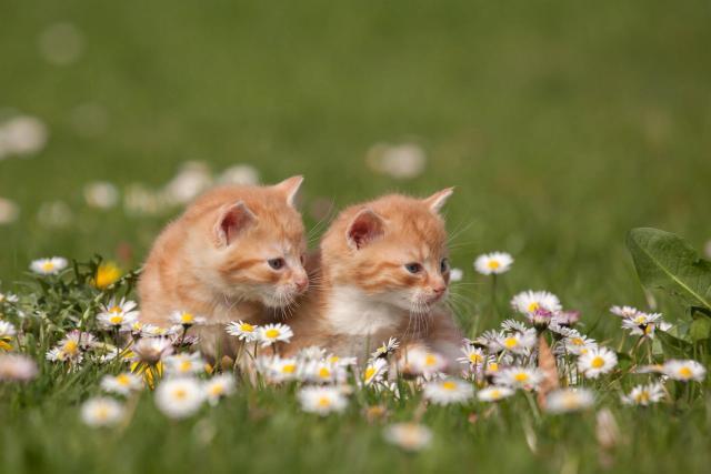 gatti e camomilla