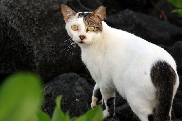 Foto Cosa fare se il Gatto perde peso?