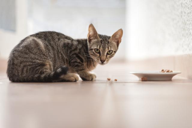 gatto non ha fame
