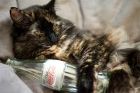 Foto Il Gatto può bere Coca Cola?