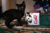 coca cola gatto