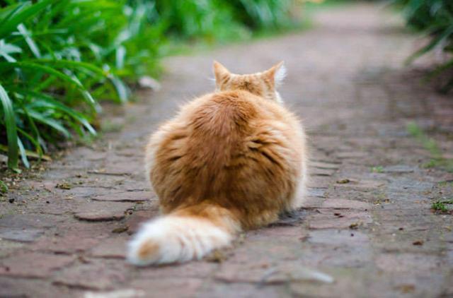 Foto Lipoma nel Gatto: cause, sintomi e trattamento