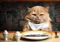 Foto Gatto può mangiare carne di pollo?