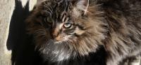 gatto parassiti