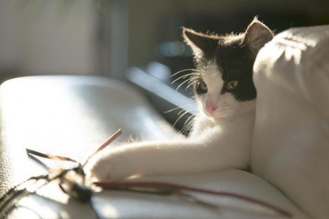 rimproverare gatto
