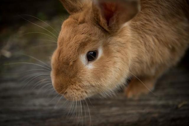 Foto Perche' il Coniglio mi morde?
