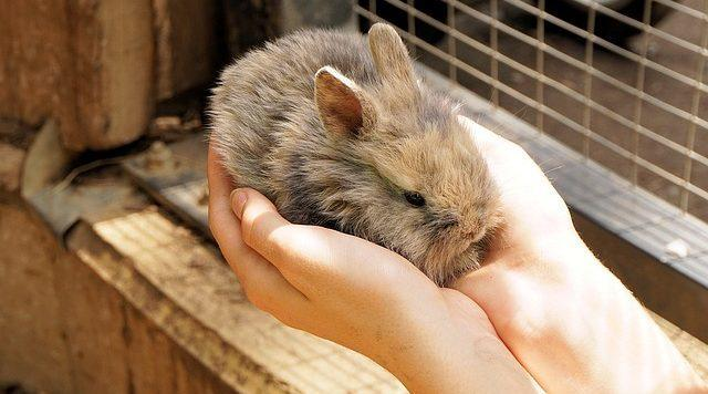 Foto Vaccini per il Coniglio: quali sono?