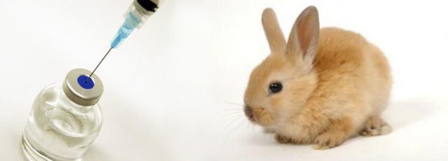 vaccinazioni del coniglio