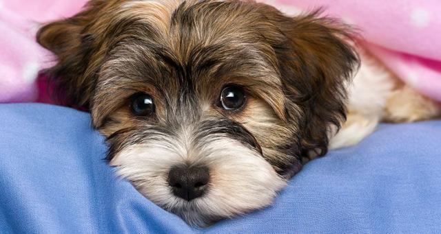Foto Un Cane può essere autistico?