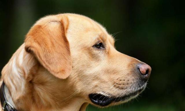 cane epilettico