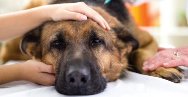 attacco epilettico nel cane