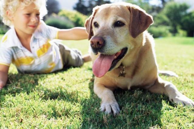 Foto Razze di cani per bambini