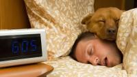 cane dome a letto