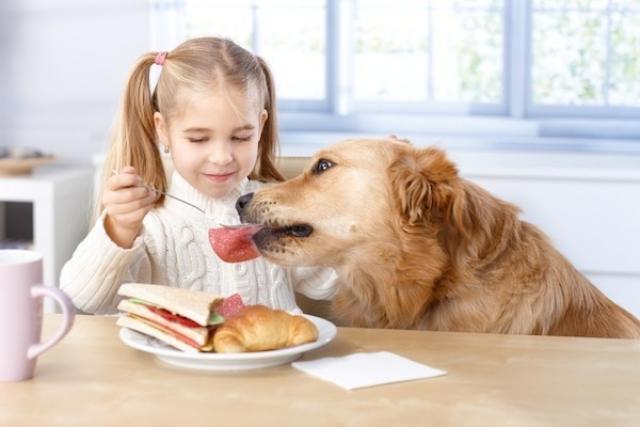 prosciutto per cane