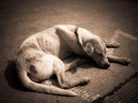 Foto Cane troppo magro: le cause