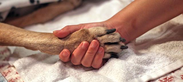 cane malato di cancro