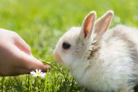 Foto Coniglio non mangia: cosa fare?