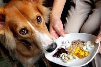 Foto Vitamine per cani: quali scegliere?
