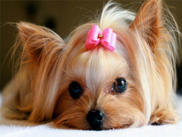 Foto Nomi per Cani