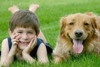 Foto Le migliori razze di Cani per i bambini