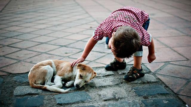 Foto Quando e perchè abbattere un cane?