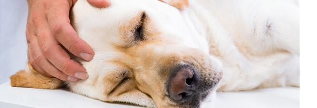eutanasia cane
