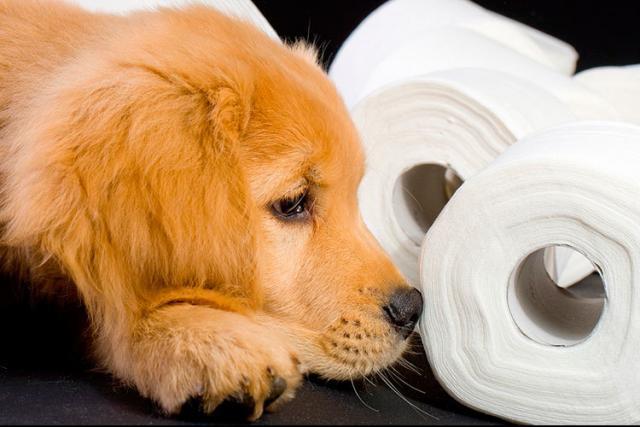 cane carta igienica
