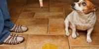 cane pipì in casa