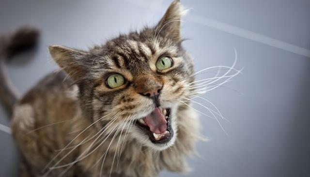Foto Stress felino: cos'e' e perche' si verifica