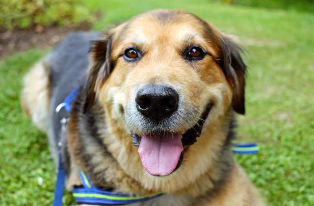 Foto Quanto vive un cane castrato?