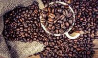 caffè cane