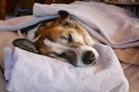 Foto Il dolore per la morte del Cane