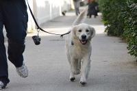 cane al guinzaglio
