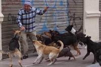 uomo aggredito da cani