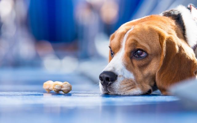 Foto Perche' il Cane non mangia il suo cibo?