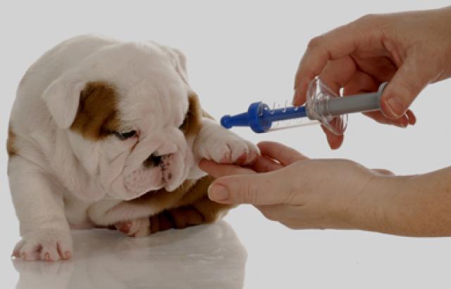 Foto I Vaccini per il Cane: le domande più frequenti